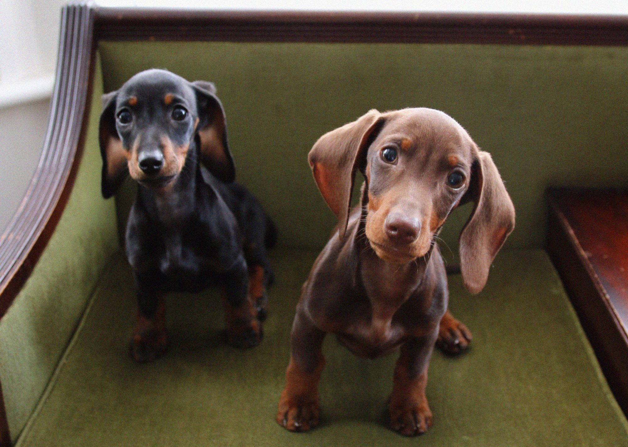 Pupdate One Month In With Two Dachshund Puppies Megan Ellaby